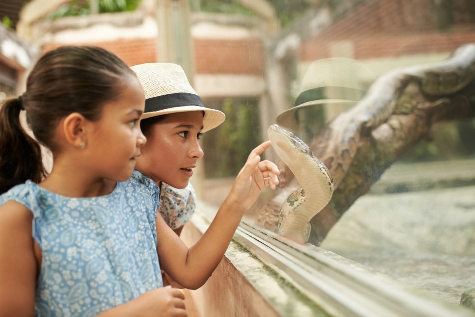 young girls pointing at python in terrarium